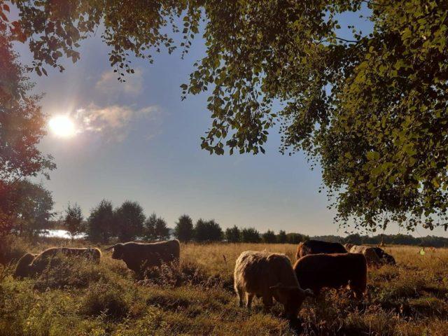 Kreivilä's farm