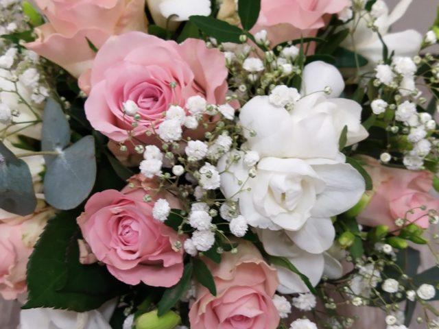 Kukka Fuksia